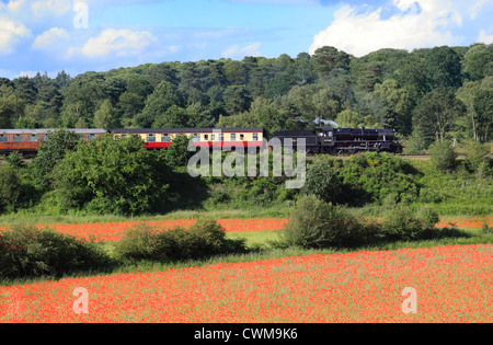 Stanier Mogul No.42968 passes through the poppy fields of Blackstone nature reserve, Severn Valley Railway, Worcestershire. - Stock Photo