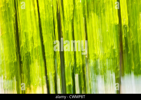 Abstract background of green forest produced by in-camera motion blur - Stock Photo