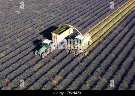 LAVENDER HARVEST (aerial view). Puimoisson, Valensole Plateau, Provence, France. - Stock Photo