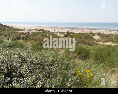 Braunton Burrows, Devon, a Special Area of Conservation, Unesco biosphere reserve and National Nature Reserve. - Stock Photo