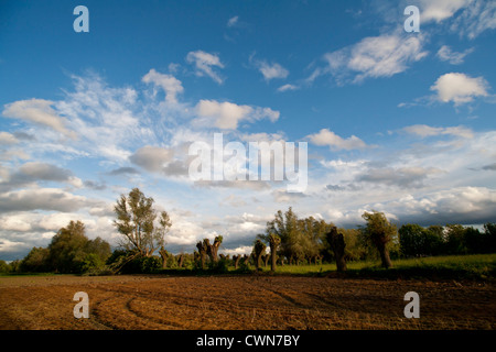 Summer wild typical Pol ish landscape with clouds, willows, fields in Kampinos, Masovia, Poland, Europe, EU - Stock Photo