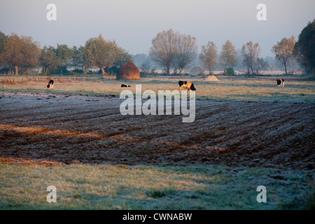 Fall autumn typical Polish landscape with fields, cows, frost in Kampinoski Kampinos National Park, Masovia, Poland, - Stock Photo