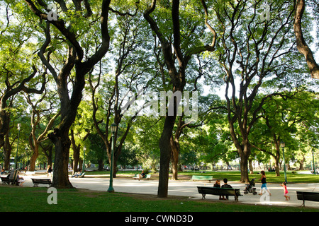 Trees at Plaza San Martin, Retiro, Buenos Aires, Argentina. - Stock Photo