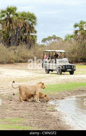tourists on an african jeep safari watching lions, Selous Game reserve Tanzania Africa - Stock Photo