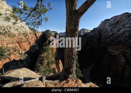 View of Zion Canyon from Angel's Landing Trail Zion National Park Utah USA high height viewpoint hiking hike popular - Stock Photo