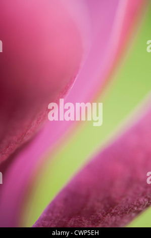 Abstract close-up of tulip - Stock Photo