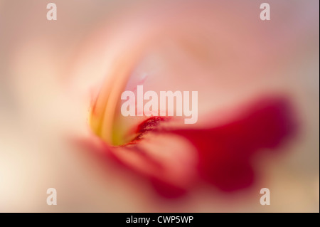 Tulip, extreme close-up - Stock Photo
