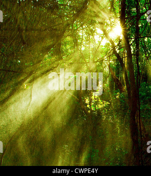 Image of misty rainforest and bright sun beams through trees branches, autumn dark woodland, shine morning sunray - Stock Photo