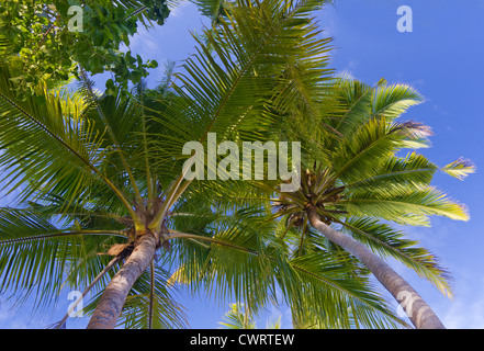 view from underneath the palm trees - Stock Photo
