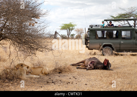 Tourists on a jeep safari watching lions and their kill, Selous Game reserve Tanzania Africa - Stock Photo