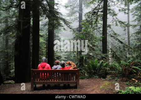 Family of three with dog sitting under tallest trees in the world, the Giant Sequoias in Redwood forests of Northern - Stock Photo