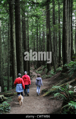 Family with dog walking through the tallest trees in the world, the Giant Sequoias in Redwood forests of Northern - Stock Photo