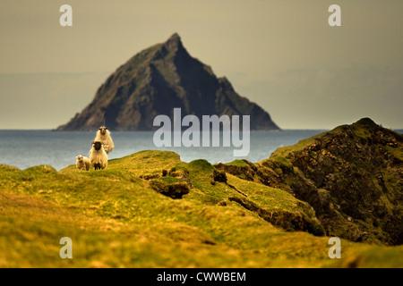 Sheep grazing on grassy hillside - Stock Photo
