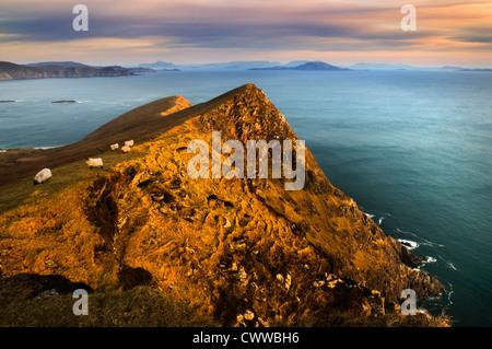 Sheep grazing on coastal hillside - Stock Photo