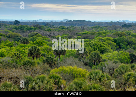 Oak hammock in spring from the Canopy Walk Tower, Myakka River State Park, Florida, USA - Stock Photo
