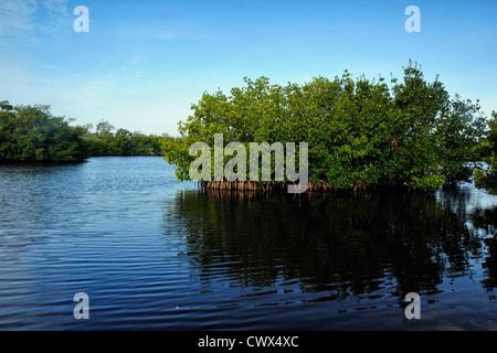 Red mangroves and salt water lagoons, Ding Darling NWR, Sanibel Island, Florida, USA - Stock Photo