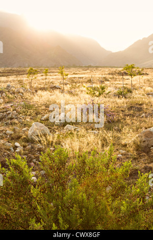 landscape with grassy steppe at Helan Mountains, north of Ningxia province, China - Stock Photo