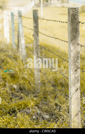 Fence barbed of garden in evening time - Stock Photo