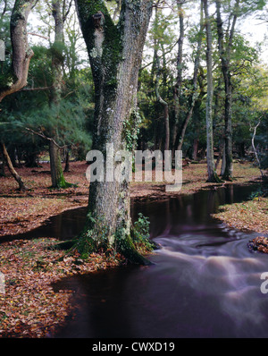 Ober Water in the New Forest after heavy rain. - Stock Photo