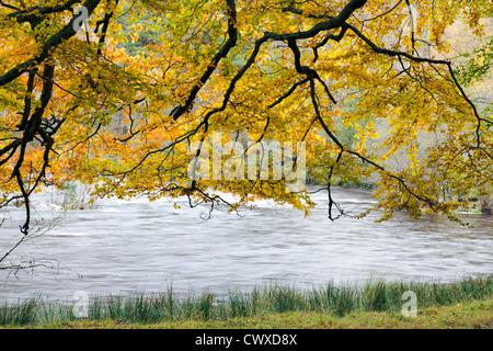 Wonderful autumnal colour near the bridge of Balgie in Scotland. - Stock Photo
