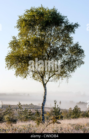 A beautiful Frosty Autumnal morning on Chobham Common. - Stock Photo