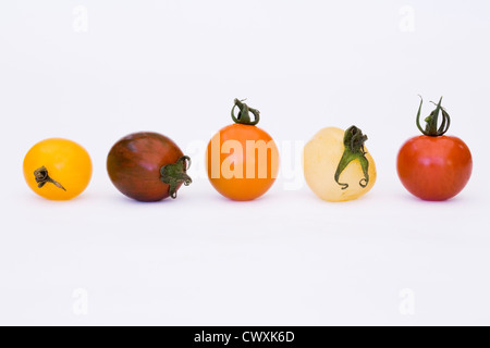 Lycopersicon esculentum. Variety of freshly picked tomatoes in a line against a white background. - Stock Photo
