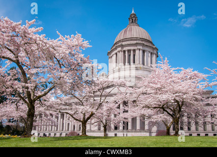 Washington State Capitol Legislative Building and blooming cherry trees in Olympia, Washington. - Stock Photo