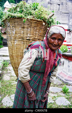 Old Indian lady in traditional costume carrying a basket full of weed. Nagar, Himachal Pradesh, India - Stock Photo