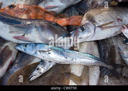 Haul from trawl net on a commercial fishing trawler: Blue cod, Barracouta, Tarakihi, Sea Perch, Sole. - Stock Photo