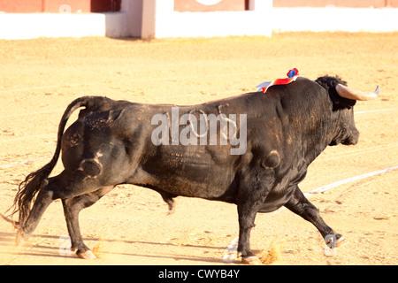 Bullfighting in Spain. 21 July 2012, La Linea de la Concepcion, Spain. - Stock Photo