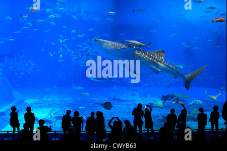Giant Whale Sharks dwarf silhouetted visitors to the Churaumi Aquarium in Okinawa, Japan. - Stock Photo