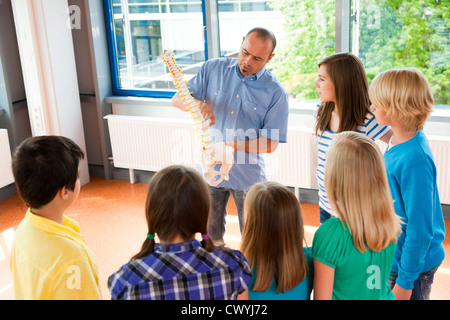 Teacher showing spinal column model in class - Stock Photo