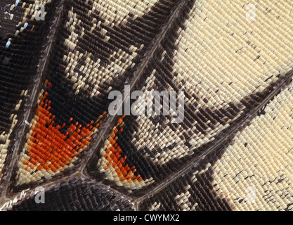 Detail of a butterfly wing, macro shot - Stock Photo