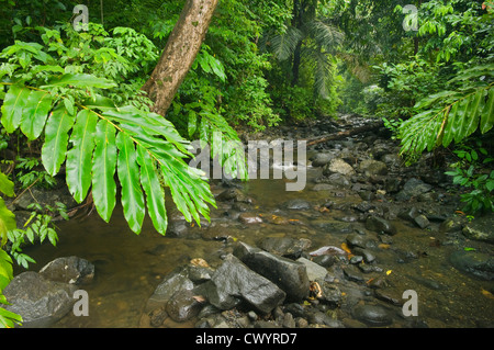 Stream and rainforest, Mt. Tompotika forest reserve, Central Sulawesi, Indonesia - Stock Photo