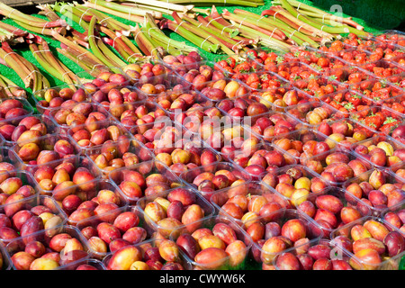Juicy Plums and Rhubarb on a Farmer's market stall. Alexandra Palace Park Muswell Hill London UK - Stock Photo