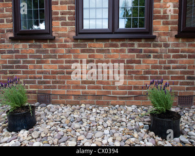 Two potted plants set on pebbles in front of a London house. - Stock Photo