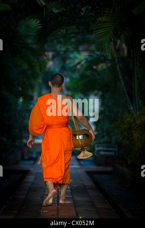 Buddhist monk in the early morning heading home after having gathered alms in Chiang Mai, Thailand, Asia - Stock Photo