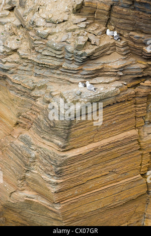 Sedimentary rock cliffs at Bay of the Tongue, Hoy, Orkney, Scotland, UK. Fulmars on cliff. - Stock Photo