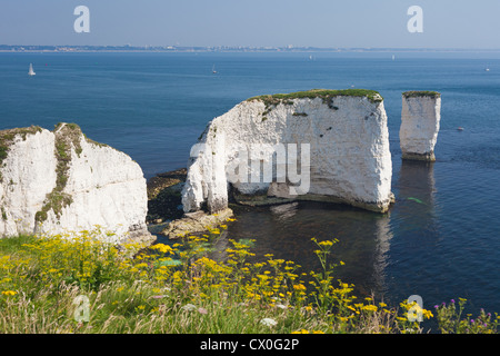 The Old Harry Rocks are chalk formations, located at Handfast Point, on the Isle of Purbeck in Dorset, southern - Stock Photo