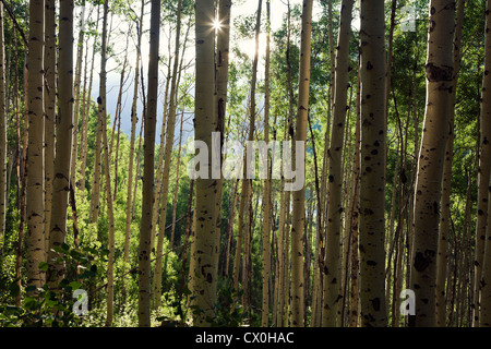 Trees in the mountains - Stock Photo