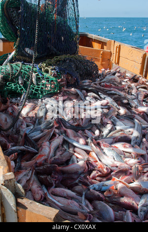 Haul from trawl net on a commercial fishing trawler. - Stock Photo