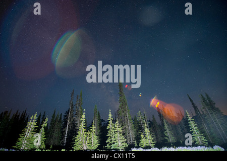 Lens flare over trees, Mount Rainier, Washington, USA - Stock Photo
