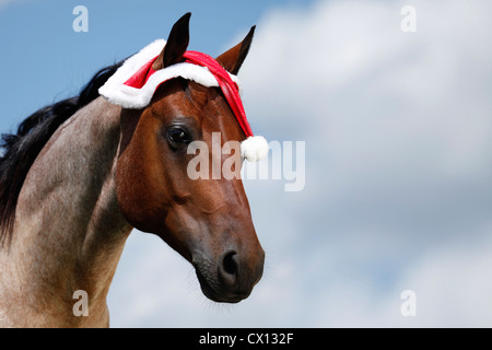Quarter Horse with Santa Hat - Stock Photo