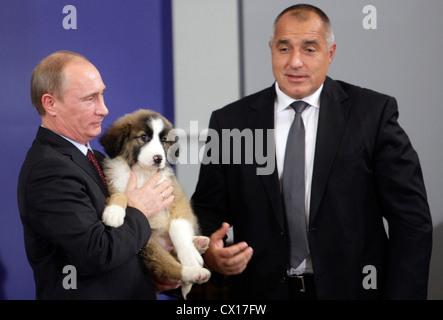 ITAR-TASS: SOFIA, BULGARIA. NOVEMBER 13, 2010. Russian Prime Minister Vladimir Putin (L) holds the puppy, a present - Stock Photo