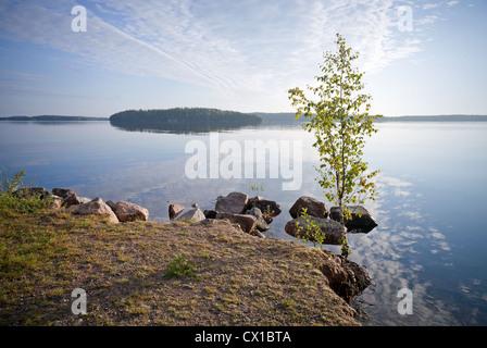 Little birch tree on the coast of Saimaa lake, Karelia, Finland - Stock Photo