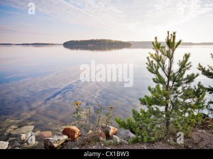 Little pine trees on the coast of Saimaa lake, Karelia, Finland - Stock Photo