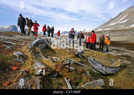 Tourists with armed guide on excursion looking at old whale bones overgrown with moss in the Hornsund, Svalbard, - Stock Photo