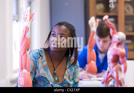 A young African American woman studies in a bioscience and anatomy class. - Stock Photo
