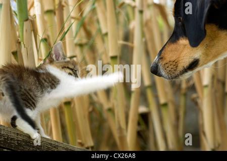 Kitten meets dog - Stock Photo