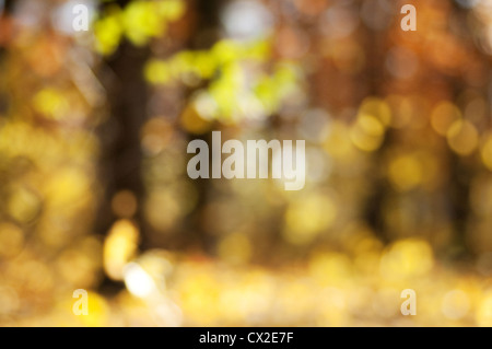 Blurred background of autumn forest with nice bokeh. Perfect as a background for studio portrait. - Stock Photo